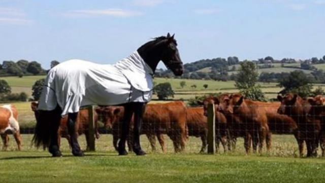 Majestic Horse Has Meeting With Neighbors Cattle