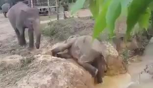'Need a boost' Elephant helps baby elephant out of a ditch