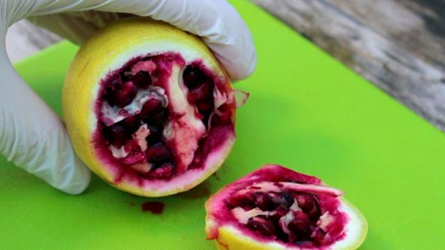 Grow Lemon and Pomegranate Seeds Together Received This Unpredictable Result