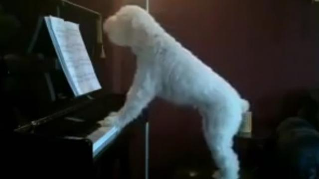 This lonely dog 'plays' the blues when its humans leave