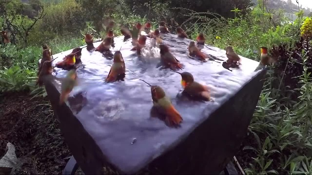 Hummingbird Pool Party Number Five!