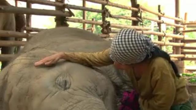 Woman Sings Lullaby And Puts To Sleep An Adorable Baby Elephant
