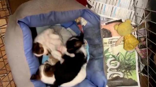 Puppy Siblings Fight Over Nap Time
