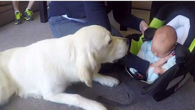 Dog Meets The New Baby For The First Time, Your Heartll Melt When He Does This
