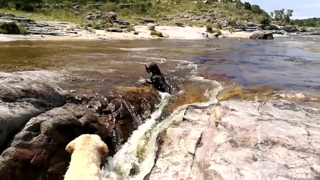 Dog saves canine friend from river