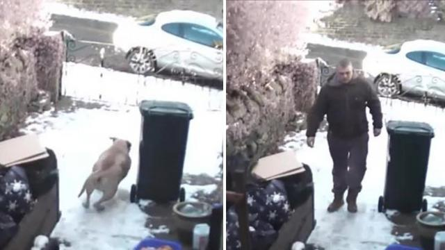Thief Stealing from yard – Surprisely greeted by two loyal