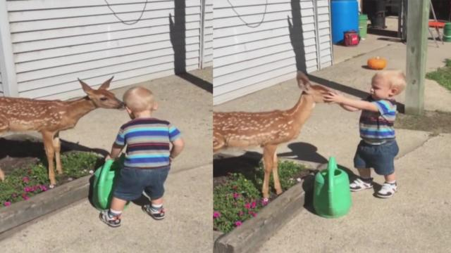 Boy Reacts to Meeting Baby Deer For First Time