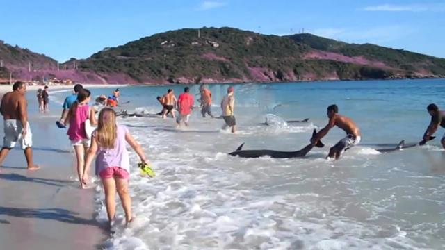 Beachgoers spot pod of 30 dolphins stranded on beach—then