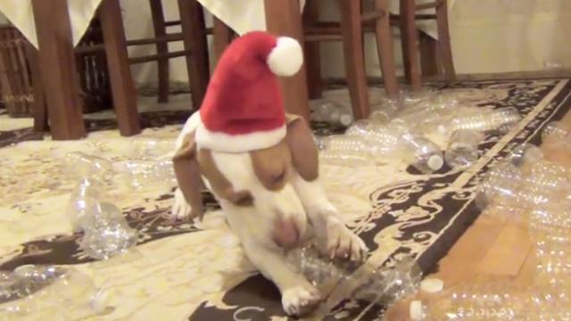 Watch this dog get the best Christmas present