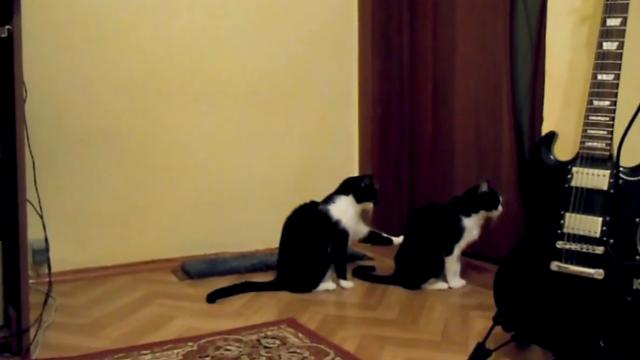 This Cat Tries To Apologize To His Best Buddy. And Then This Happens… LOL