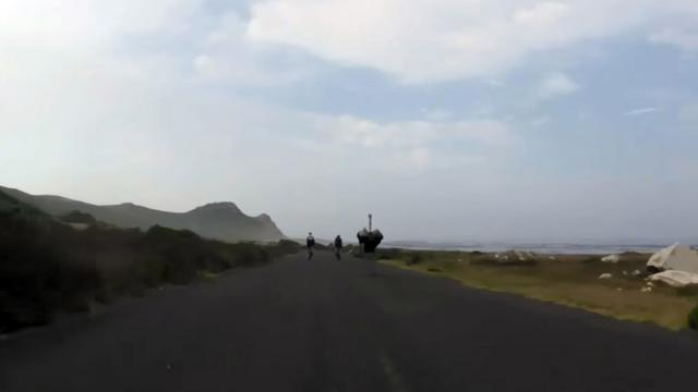 Ostrich joins cyclists for a jog in S. Africa_Large