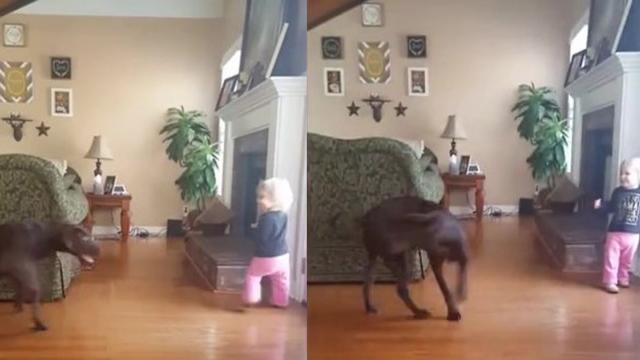 Tail Chasing Dog Teaches Smart Toddler How To Spin In