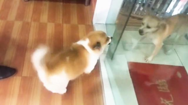 Dogs go crazy until glass door is opened