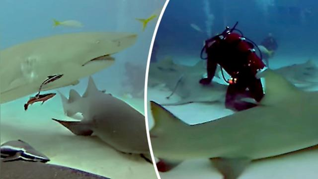 Diver is literally surrounded by sharks on ocean floor—but