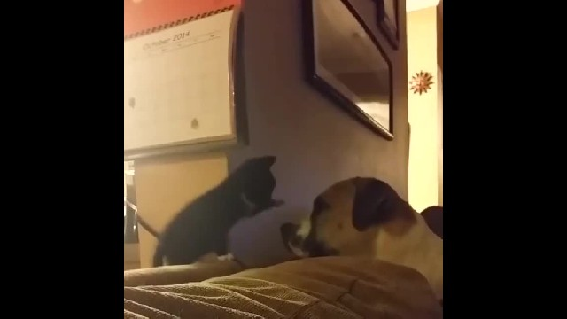 Video gracioso de perros y gatos
