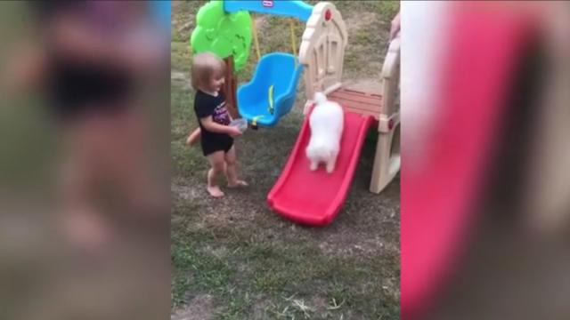 Tiny Puppy Hijacks Toddlers Playset And Has A Ball On The Slide