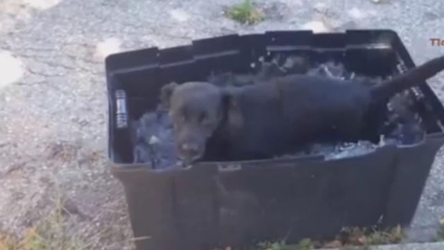 This dog really 'digs' his bath