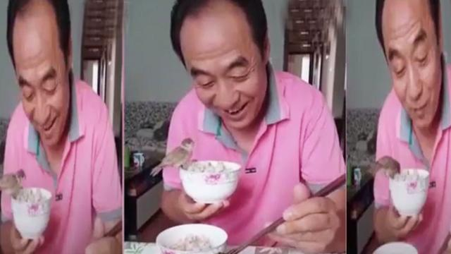 The bird eats rice together with its owner