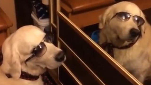 Cool Pooch Stares at His Own Reflection
