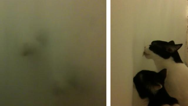 Creeper Kitties Create Ghost Faces With Shower Curtain