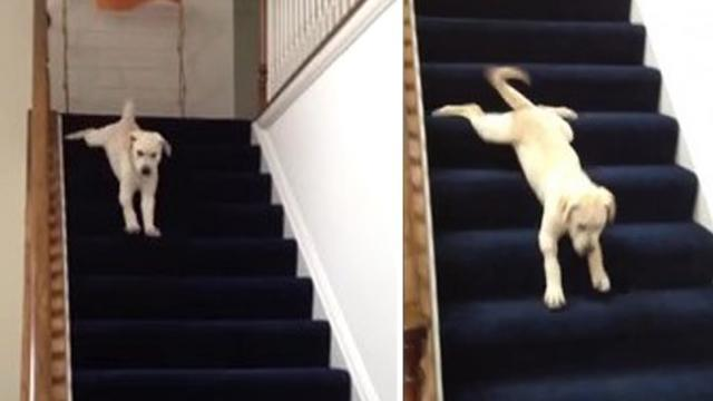 This will melt your heart! This heroic pup stomps right over his fear of stairs when he hears kids
