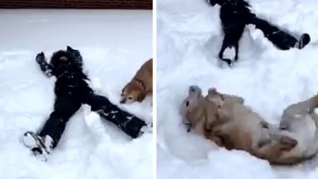 Charlene and Brewer making snow angels, and dog-angels!_Large
