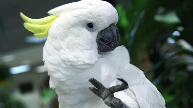 Parrot Dancing Despacito, need to see this