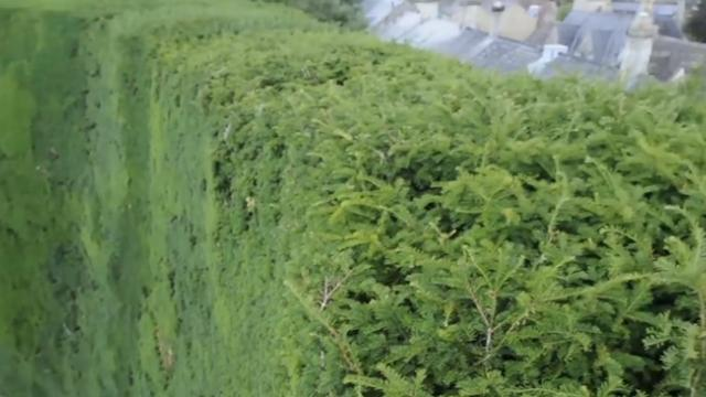 Don't look down while trimming this giant hedge