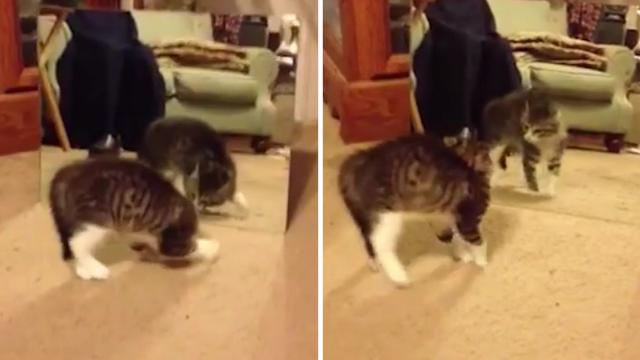 Kitten has Hilarious Reaction to Her Reflection