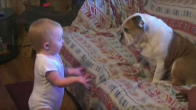 Toddler Walks Up To Dog On Couch And Their Conversion Has