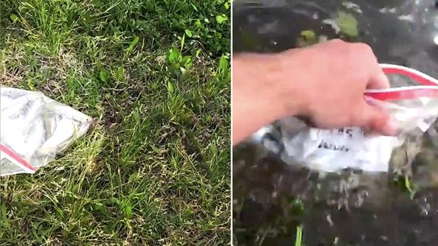 Man prepares bag of fish to feed bass When this 'thief'