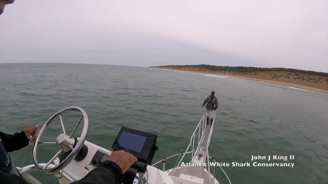 Shark Researcher Has a Frighteningly Close Encounter With a Breaching Great White