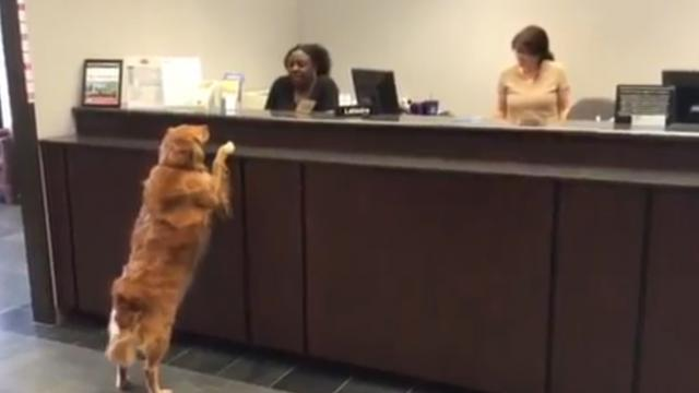 A Dog Walks Up To The Counter At A Bank