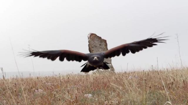 Filmmaker Captures Gorgeous Footage of Colorado Birds of Prey in Their Natural Habitat