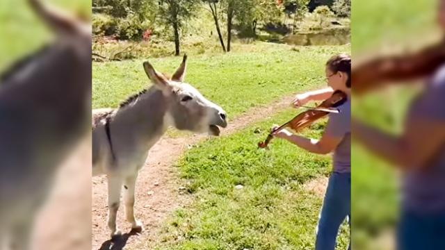 Donkey Loves Sound of Violin