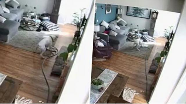 Naughty Dog Brings Hose Inside And Destroys House