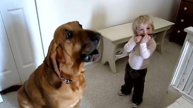 Toddler and dog play the blues