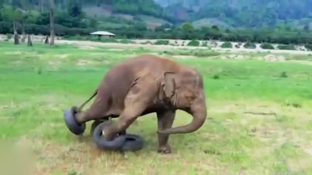 These Cute Baby Elephants Falling All Over & Getting Into Mischief