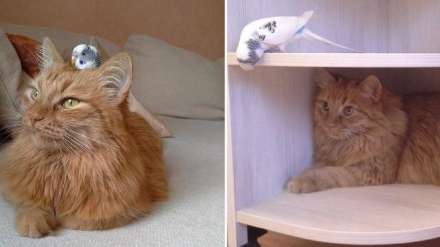 This Friendship Between A Cat And His Bird Pal Is What The