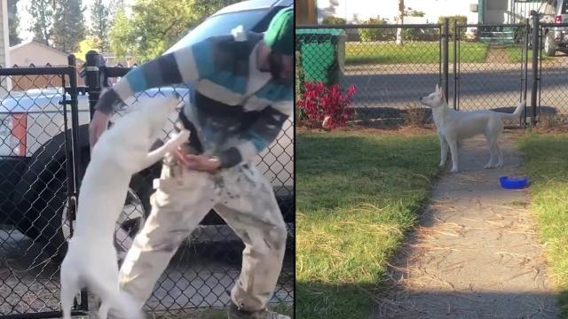 Watch Incredible Moment Blind and Deaf Dog Smells Owners Car Pull Up