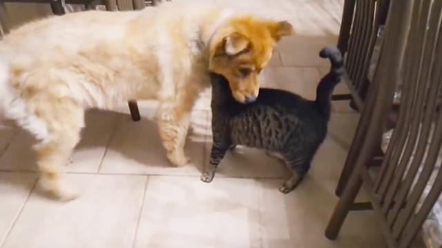 Blind dog's emotional reunion with best friend caught on camera