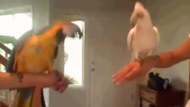 Bird dance off