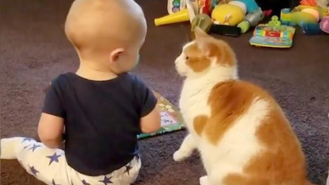 Baby meets cat—but now keep your eyes on what the