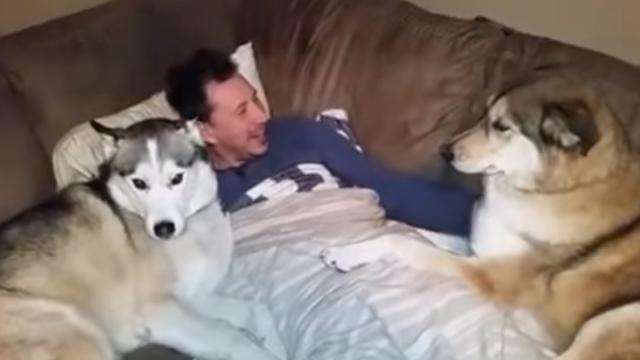 Jealous dog demands more attention