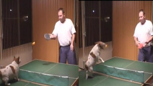 Talented Dog Can Play Ping Pong With His Owner