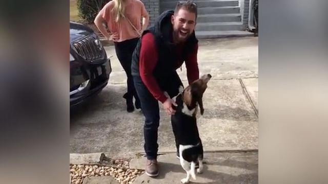 Beagle Loses His Mind When He Sees Dad After 18 Months Apart