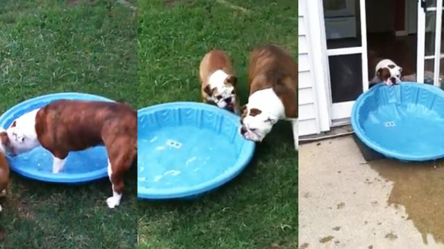 Dog Gets An Indoor Pool (Video)