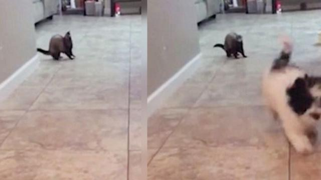 Gangster' Ferret Scares Off Puppy and Then MOONWALKS Away