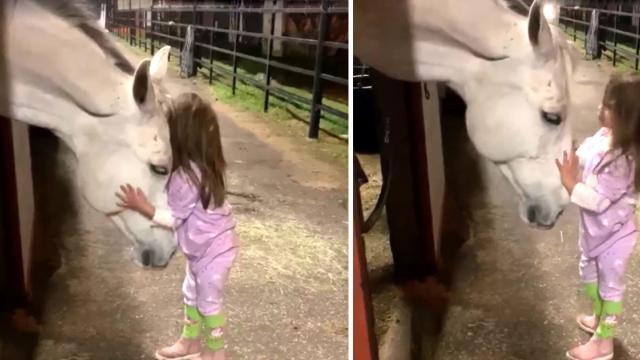 CBS News - Girl soothes horse in viral video Facebook