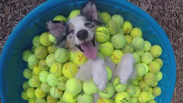 Watch As This Dog Truly Lives The Baller Life